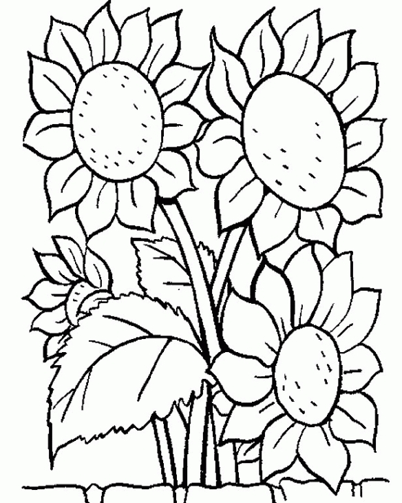 Sunflowers coloring page