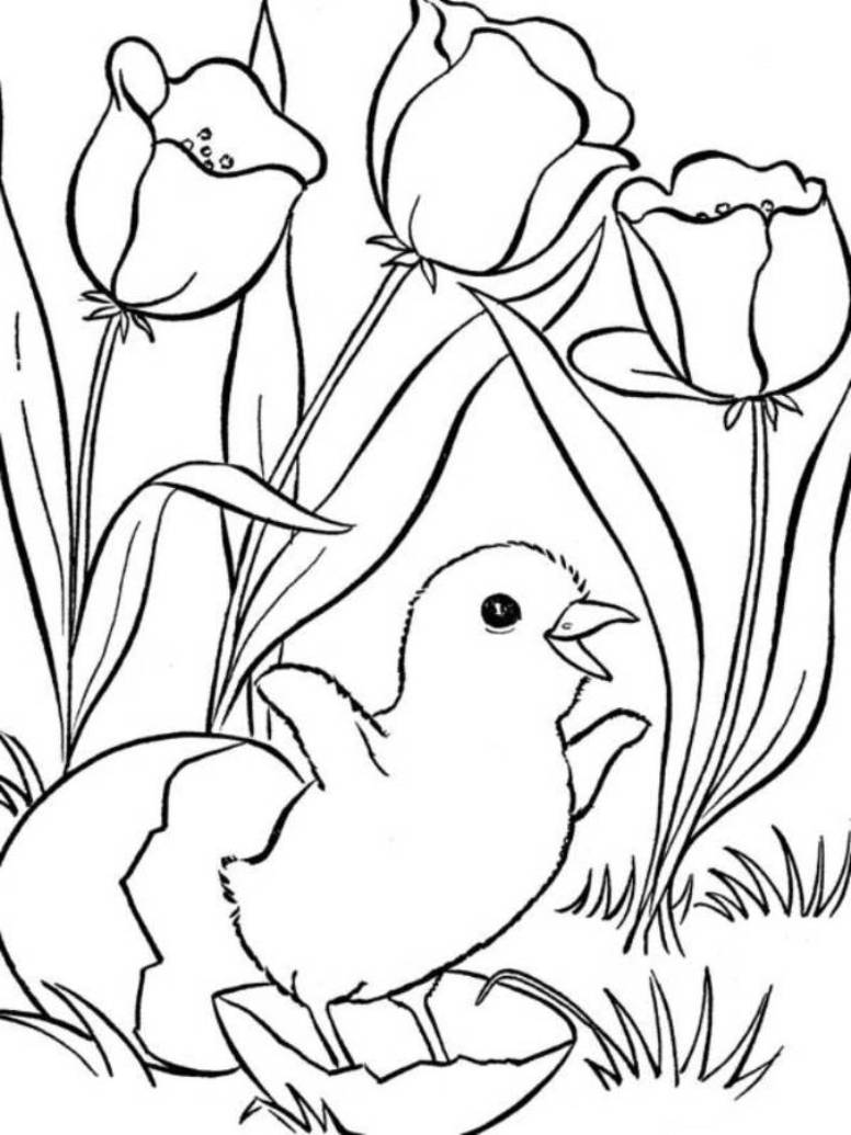 tiny bird coloring page