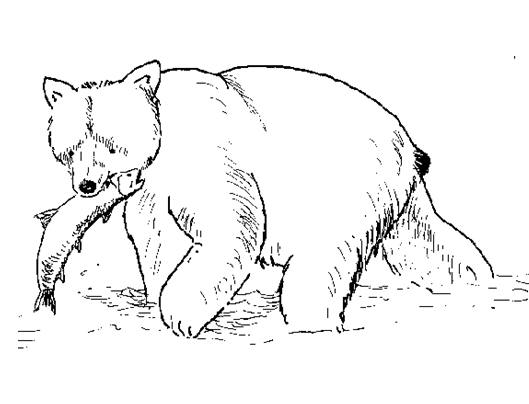 Honey-lover Bear 20 Bear coloring pages   Free Printables