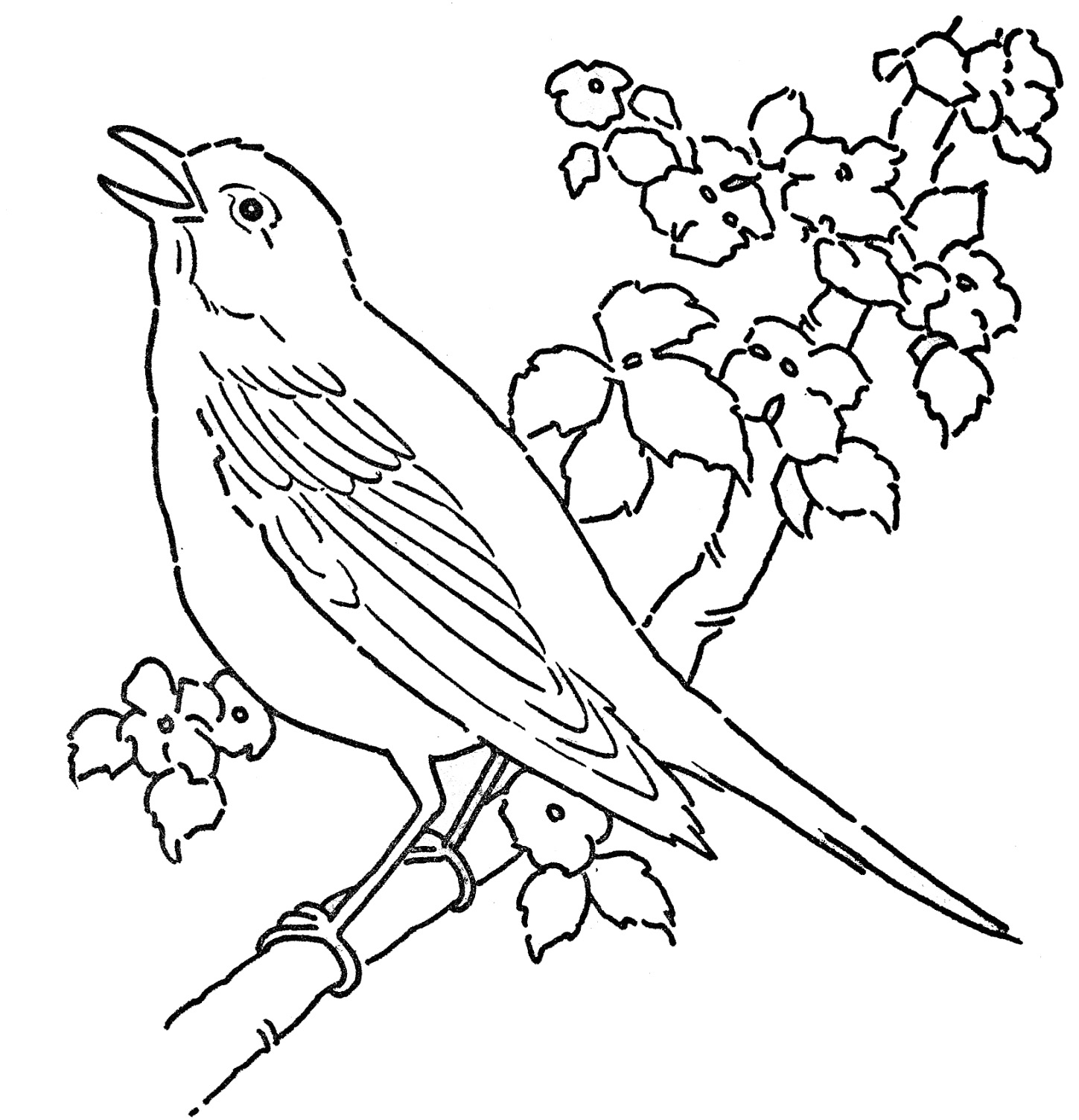 Enchanted creature Bird 20 Bird coloring pages Free