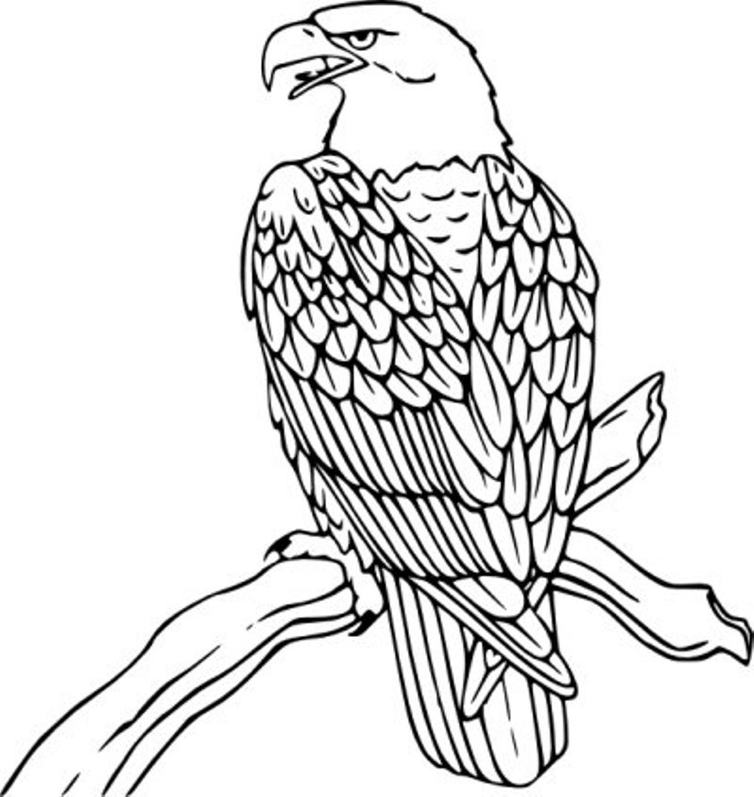 Eagle Bird image coloring page