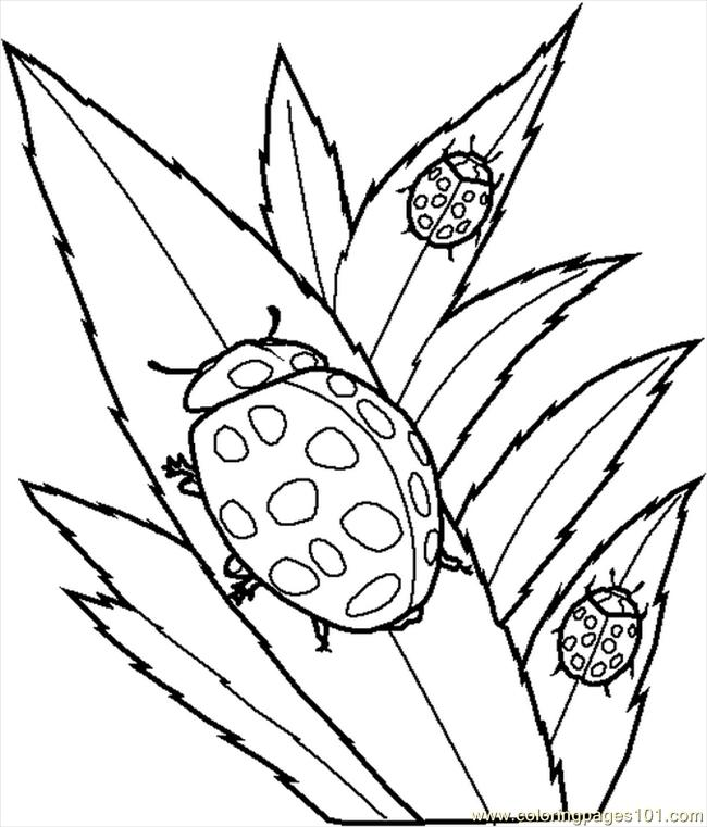 png file has a click the cicada nymph coloring pages to view