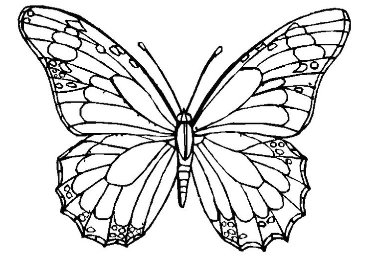 cute butterfly coloring page butterfly image - Butterfly Coloring Pages