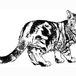 Clever domestic animal Cat 20 Cat coloring pages