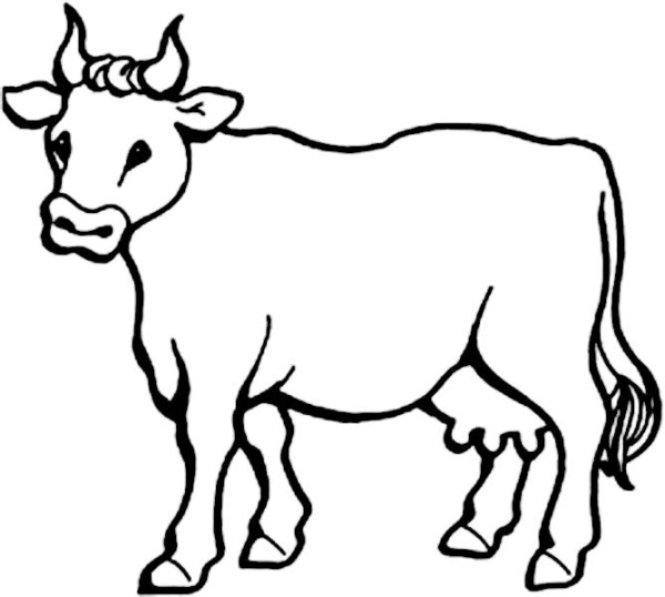 realistic image of a Cow
