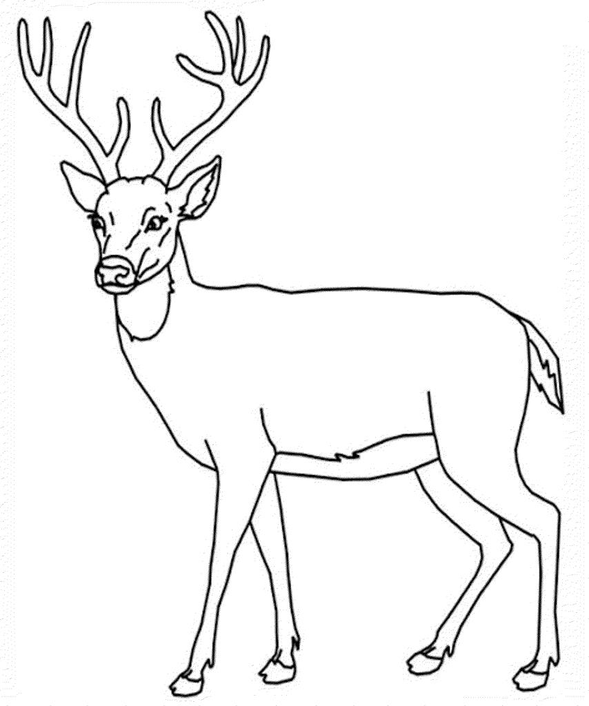 Free coloring pages deer - Deer Printable Page