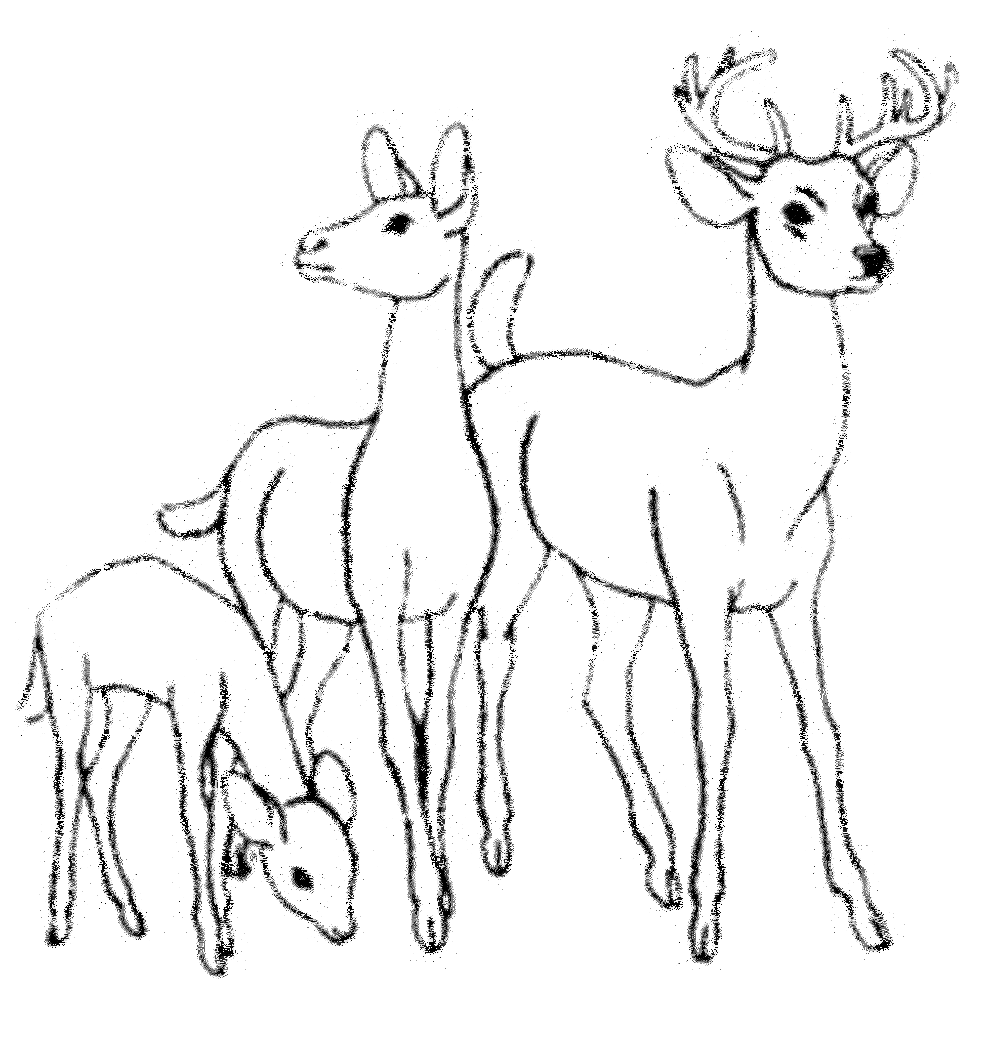 Deer family coloring page