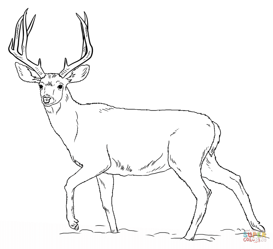 Stag standing into the woods