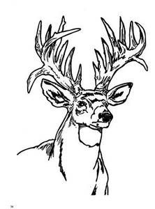 Ruminant mammal Deer 20 Deer coloring