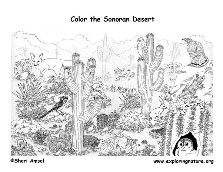 Deserts Coloring Pages For Kids