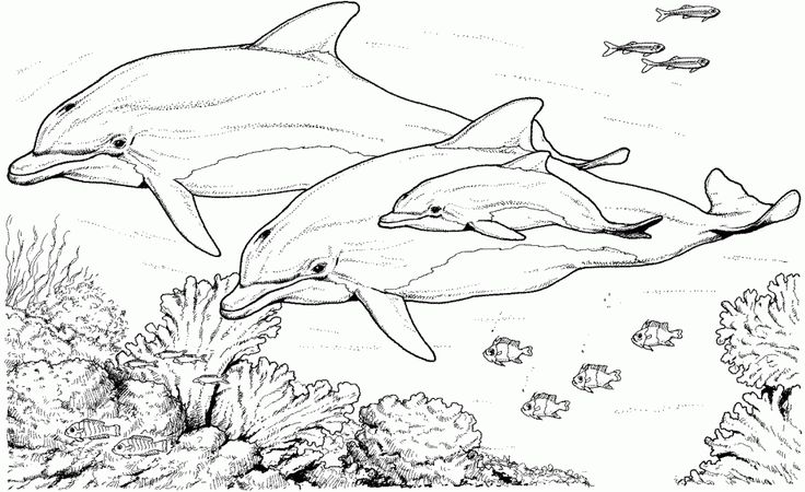 Friendly underwater creature 20 Dolphin coloring pages | Free Printables