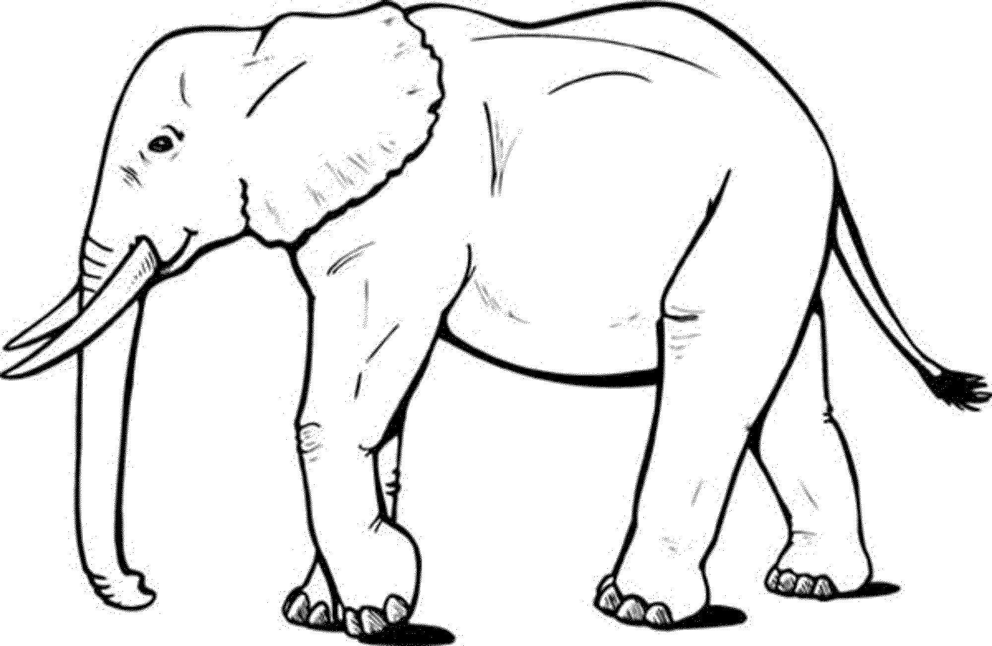 huge Elephant coloring page
