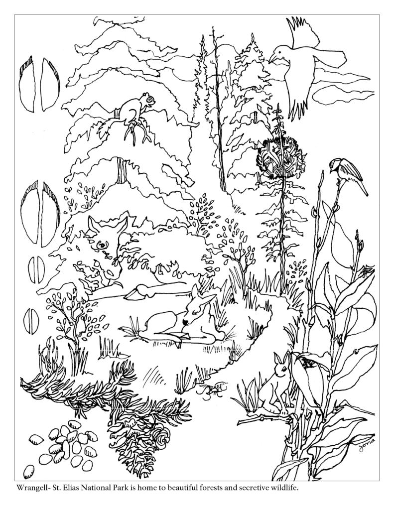 Раскраски природа в лесу