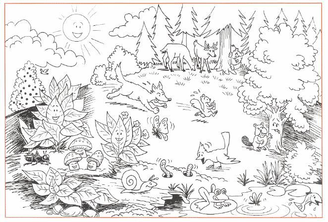Awesome wildness of forests 17 forests coloring pages for Forest coloring pages printable