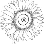 Beautiful blossom Sunflower 17 Sunflower coloring pages