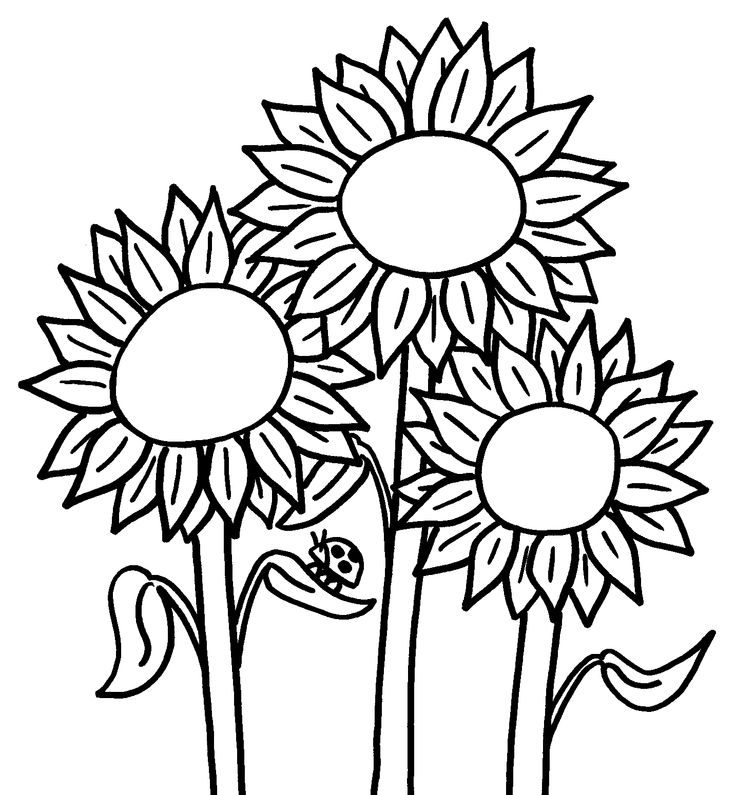 Best Sunflower Coloring Pages Kids Images Coloring Page Design