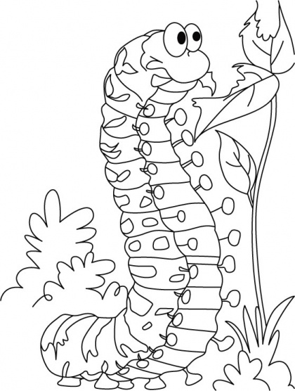 Caterpillar Coloring Pages From Addison