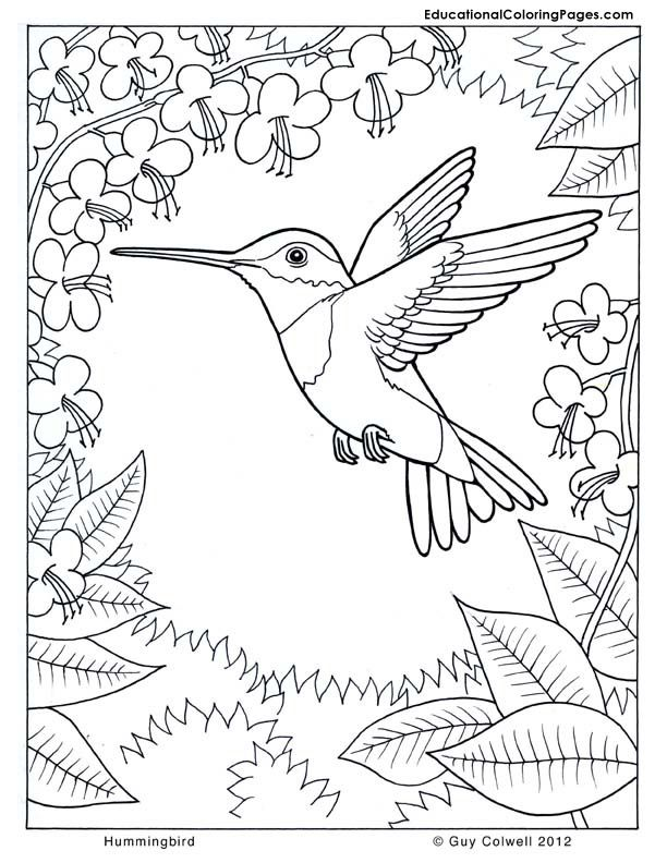 beautiful bird coloring page