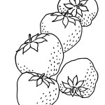 Yummy fruit strawberry 17 strawberry coloring pages